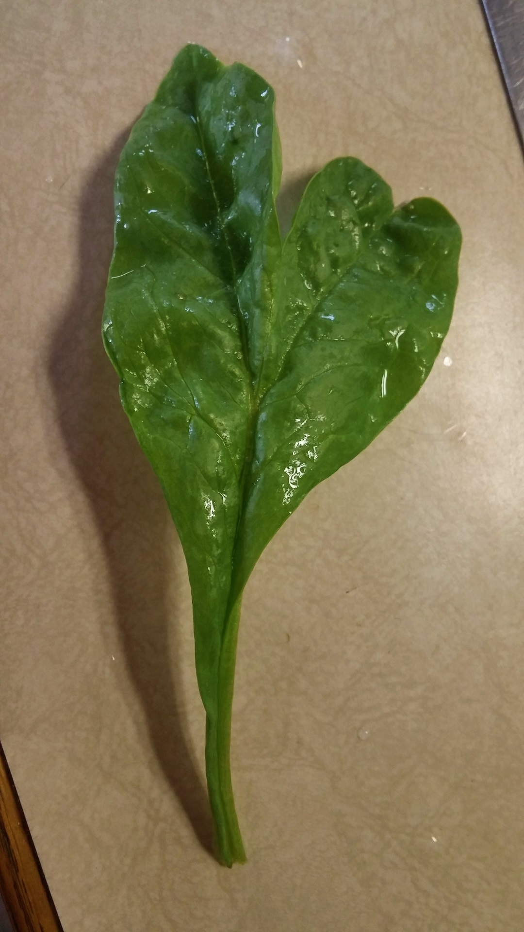 Heart Spinach