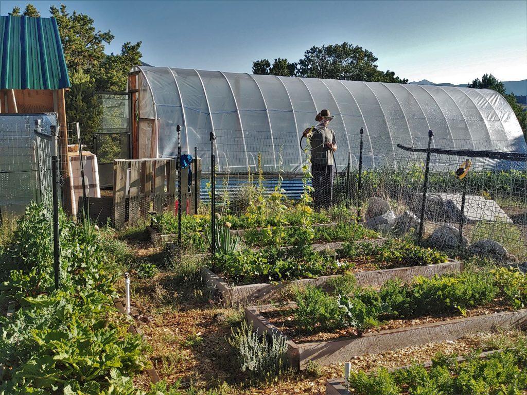 Homesteader watering outdoor garden beds